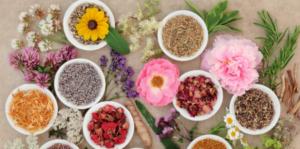 Requinquez-vous avec les plantes médicinales